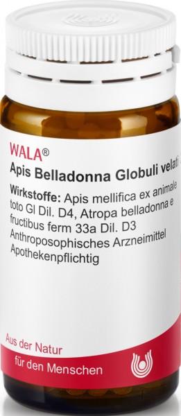 APIS BELLADONNA GLOB VELAT  (84882) Bild-01