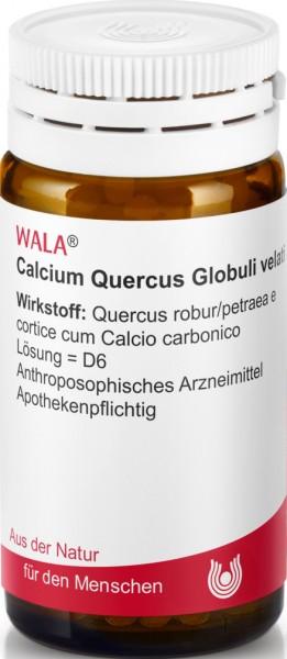 CALCIUM QUERCUS GLOB VELATI  (81091) Bild-01